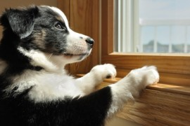Come abituare il cane a stare da solo in casa