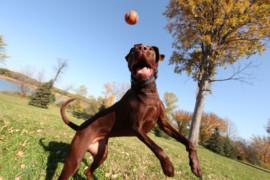 Come giocare e divertirsi col proprio cane