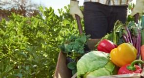 Un mondo più felice grazie alla bioagricoltura