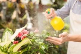 Le migliori tipologie di olio di neem solubile